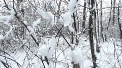 Winter landscape with snow fall off and falls from trees  Stock Footage