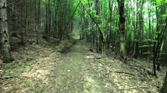 Walk through the green forest, early summer, on a meandering path Stock Footage