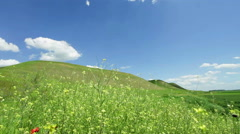 Spring landscape in hill - field flowers closeup - stock footage