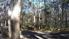 Majestic Karri tree forest in South West Australia Stock Footage