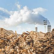 Log and wood piles in industrial timber factory. Stock Photos