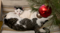 Two cats sleeping in an embrace christmas Stock Footage