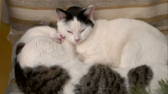 Two cats sleeping in an embrace Stock Footage
