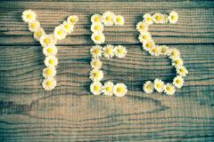 Yes wrote with daisies on wooden background Stock Photos