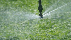 Agriculture, field watering sprinkler - stock footage