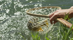 Man catching a fish from landing net Stock Footage