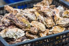 Oysters market in Cancale, France Stock Photos