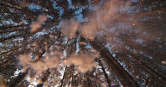 Majestic snowy forest in a Sunny winter day, the snow fall on the camera,slow Stock Footage
