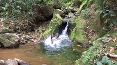 Man jumping into a small pond at the base of a small waterfall  4K Stock Footage