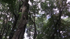 A lot of trees on the old Orthodox cemetery Stock Footage
