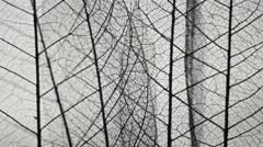 Skeletal background of leaves. - stock footage
