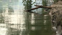 The shore of a small lake Segrino Stock Footage