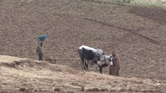 Boy plowing dry field with plough behind cows in Simian Mountain Stock Footage