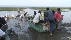 Maribou and Pelicans in water at Lake Awassa by the fisher boats getting fish Stock Footage