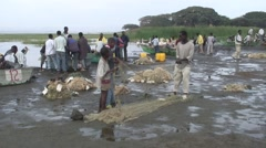 Fishermen soting nets at the shore of Lake Awassa Stock Footage