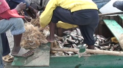 Fishermen taking fish out of nets at Fish Market at Lake Awassa with tone Stock Footage