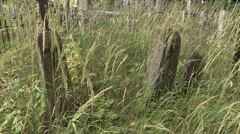 Old graves overgrown with grass groomed Stock Footage