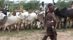 Hamer people woman dances at the bull running cermony in Omo Valley - stock footage