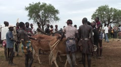 Hamer tribe man run over bull at the bull running cermony in Omo Valley - stock footage
