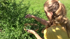 woman pick mint plant - stock footage