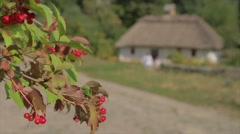 Berries on the background of the old house. Stock Footage