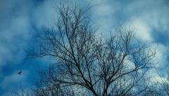 Time lapse video of leafless tree against cloudy sky Stock Footage