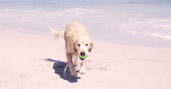Wet dog at the beach Stock Footage