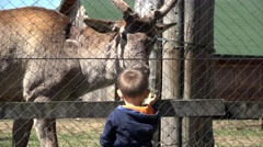Little child feeding stag at zoo park, early education Stock Footage