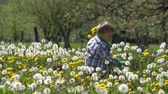Lovely toddler blowing dandelion, blossom spring nature Stock Footage