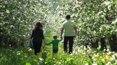 Young family walking hand in hand in blossom orchard, parents rise up little boy Stock Footage