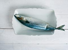 Atlantic mackerel - stock photo