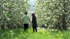 Lovers waking in blossom orchard, sunny spring day, love is in the air Stock Footage