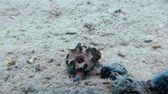 Macro Color Nudibranch Mollusc True Sea Slug. Stock Footage