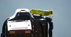 Green Grasshopper jumps. Photographer. Camera photo. Stock Footage