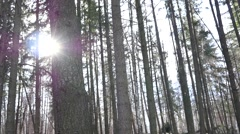 Sun through tree trunks in a forest park in Sofia Bulgaria Stock Footage