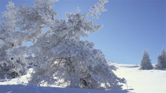 Winter landscape with frosted pine trees and mountaineers Stock Footage
