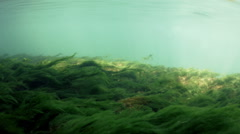 Bottom of a Fresh Water River with Current - stock footage