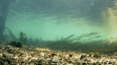 Bottom of a Fresh Water River with Mussels - stock footage