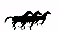 Horses galloping in silhouette on white background Stock Footage