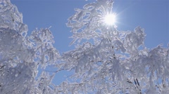 frost falls on super slow motion past two frosted birch in winter - stock footage