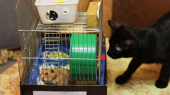 Hamster in a Cage and Black Cat - stock footage