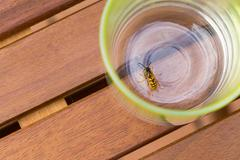dangerous wasp drowned in drink - stock photo