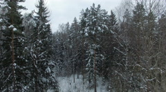 AERIAL 4K: Winter forest Stock Footage