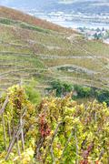 Grand cru vineyard of Cote Rotie, Rhone-Alpes, France Stock Photos