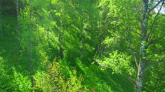 Mixed forest on a mountain slope Stock Footage