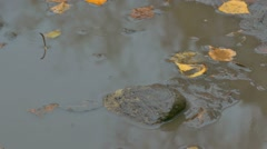 yellow leaves floating in pool is a stone brick autumn - stock footage