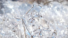 Icy branch with beautiful pure ice illuminated by the sun Stock Footage