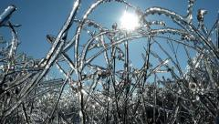 Beautiful branch icicles through sunbeams beautiful sparkling frozen water - stock footage