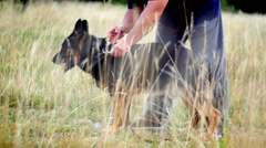 Dog trainer caressing german shepherd in the field Stock Footage