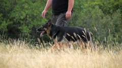 Medium shot of a german shepherd walking on the side of the owner Stock Footage